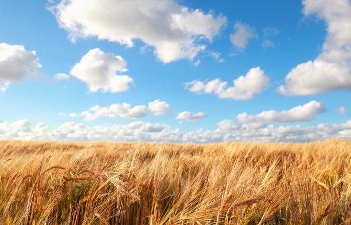 Bild Landwirtschaft